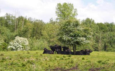 Tagesausflug: Unterwegs zu Wasserbüffeln
